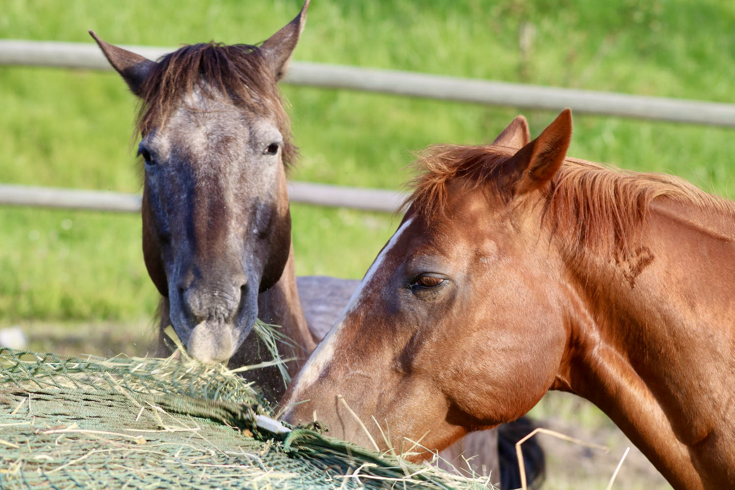 two horses are eating hay from a stack